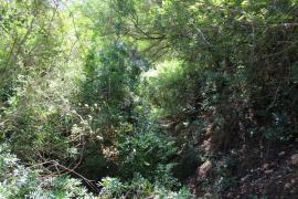 Santa Eulària pide al Govern que limpie los torrentes ante la llegada de la época de lluvias