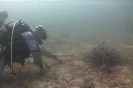 'Gaceta Náutica' avisa que las cianobacterias se extienden en la bahía de Palma
