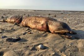 Desvelado el misterio de la extraña criatura aparecida tras el huracán Harvey