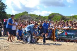 En lo que va de año se han recuperado 35 tortugas varadas en aguas de Baleares