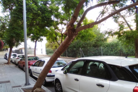 Aceras rotas y un árbol a punto de caer
