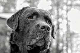 Que no te engañen, los ojitos tristes de los perros no significan culpabilidad