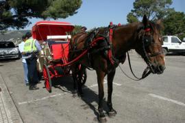 Cort revisa el servicio de galeras para garantizar el cuidado de los animales