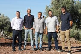 La DOP Oliva de Mallorca prevé un récord de cosecha de 100 toneladas