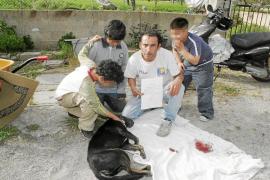 «Han matado al perro de un disparo con mi hijo de diez años a escasos metros»