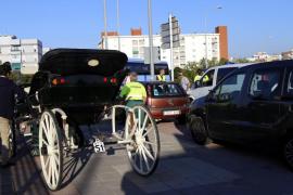 El caballo de una galera se escapa en la rotonda del Estadi Balear