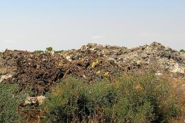 Un juez avala y confirma el cierre de la planta de residuos cárnicos de sa Marina de Llucmajor