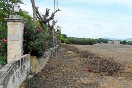 Indignación en Manacor al dar el Govern luz verde al parque solar de Santa Cirga