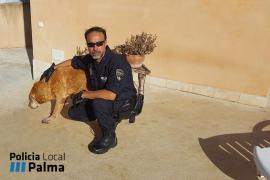 La Policía Local de Palma rescata a un perro que cayó en una piscina