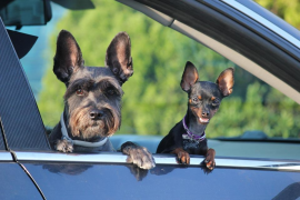 Regalar mascotas como premio o cortarles el rabo o las orejas estará prohibido a partir de febrero
