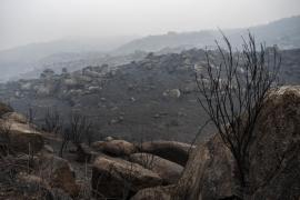 Los primeros indicios apuntan a la intencionalidad en la mayoría de incendios