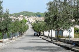 Animan a los vecinos de Sant Joan a recolectar las aceitunas de los olivos de la vía publica