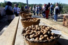 Ibiza tiene distintas variedades de almendras y desde el Consell d'Eivissa, Frutos Secos Ibiza e IbizaSabor se están intentando