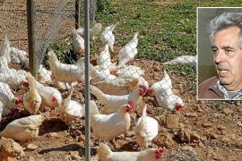 «Tengo 100 pollos engordados a punto de matar y no puedo sacrificarlos en Baleares»