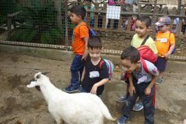 Alumnes de 1er 2on i 3er de primària del CEIP Anselm Turmeda varen visitar Natura Parc