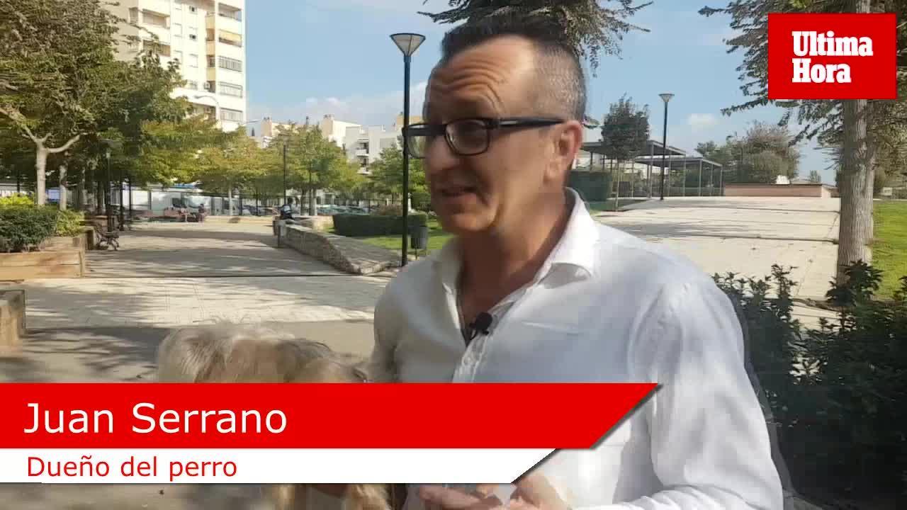 Un niño de acogida de nueve años logra recuperar a su perro de terapia en Palma