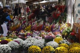 Flores para Tots Sants