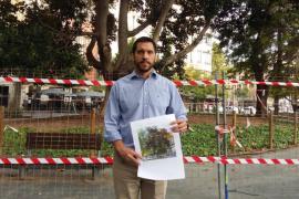 Las tareas de poda del ficus de plaza de España empiezan este lunes