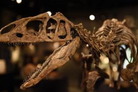 ¿Por qué empezaron a vivir los mamíferos a la luz del día?