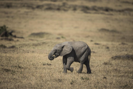 Dos turistas mueren aplastados por un elefante cuando intentaban fotografiarlo
