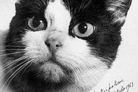 El único gato que fue al espacio tendrá su estatua en París