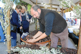 'Esplet' de olivas en Caimari al precio de siempre
