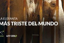 «La elefanta más triste del mundo» lleva 40 años sola en el zoo de Córdoba, según Pacma