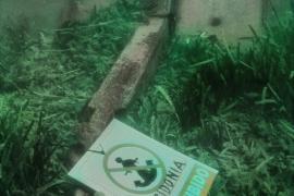 Salvem Portocolom denuncia el fondeo de una embarcación sobre una pradera de posidonia