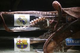 El pulpo Iker «pronostica» que el Real Madrid pasará a la final