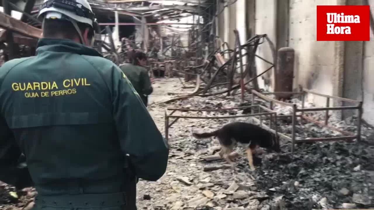 La Guardia Civil inspecciona con un perro las naves afectadas por el incendio en el polígono de Marratxí