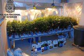 Una discusión entre vecinos destapa una plantación de marihuana en un piso de Palma
