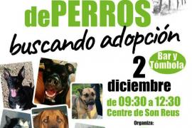 25 perros a la espera de ser adoptados en Son Reus