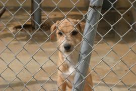 La adopción de mascotas es ya la opción preferida por los hogares españoles