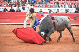 Unidos Podemos pide explicaciones al Gobierno tras la suspensión de la ley de toros 'a la balear'