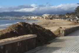 Emaya interviene en las zonas de Palma más afectadas por el temporal