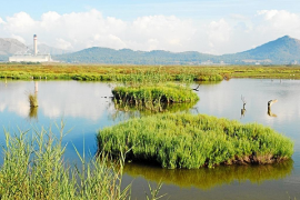 La saturación de las zonas turísticas de la bahía de Alcúdia amenaza s'Albufera