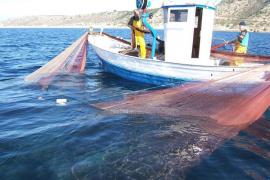 Advierten que la ampliación del puerto de Alcúdia puede afectar a la pesca del 'jonquillo' y la sepia