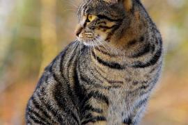 El Ministerio de Exteriores francés adopta dos gatos para acabar con el asedio de los ratones