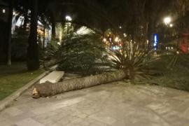 El viento provoca 88 incidentes en Baleares y rachas de hasta 131 km/h