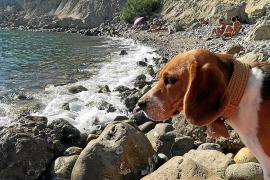 Calvià extrema la vigilancia de las conductas incívicas de dueños de perros