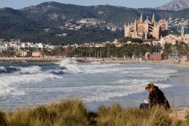Palma, la ciudad favorita de los turistas alemanes durante 2017