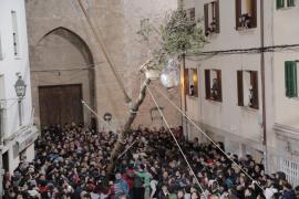 El alcalde de Pollença cumple su promesa y elimina el gallo vivo del Pi de Sant Antoni