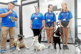 Dogspital, perros como terapia