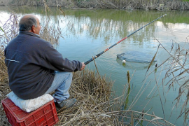 La pesca de la anguila aumenta en s'Albufera con motivo de las fiestas de Sant Antoni