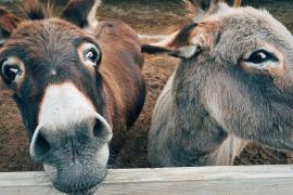 Denuncia las molestias de un burro y le acaban incautando 69 plantas de marihuana
