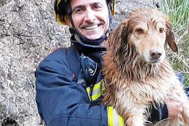 Laborioso rescate de una perra que se cayó a un pozo entre Peguera y Capdellà