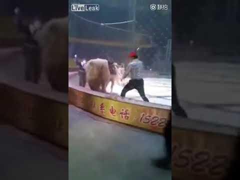 El ataque de un tigre y un león a un caballo en un circo indigna a los internautas