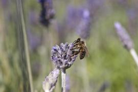 Protegen a las avispas y abejas que habitan s'Albufera de Mallorca