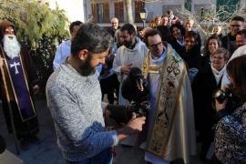El cuervo 'Jeroni' baja del campanario y entrega el pan a Sant Antoni y Sant Pau