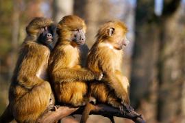 Cincuenta monos se escapan y obligan a evacuar el zoo de París